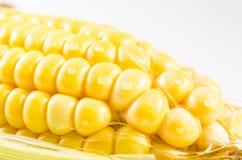 Zamyka up żółta świeża kukurudza z wodą opuszczającą odizolowywającą na whi zdjęcia royalty free
