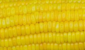 Zamyka up żółta kukurydzana ziarno tekstura Obrazy Royalty Free