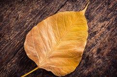 Zamyka up żółty złocisty liść na starym drewnie Obrazy Stock