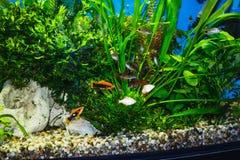Zamyka up akwarium cysternowy pełny ryba obraz stock