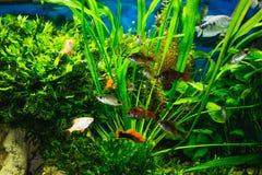 Zamyka up akwarium cysternowy pełny ryba zdjęcia stock