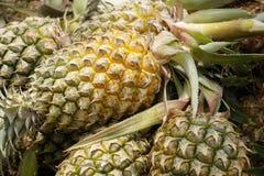 Zamyka up ananasy Obrazy Royalty Free