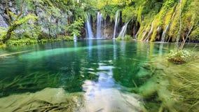 Zamyka up błękitne siklawy w zielonym lesie podczas dnia wewnątrz Zdjęcie Royalty Free