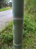 Zamyka up bambus Zdjęcia Royalty Free