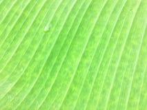 Zamyka up bananowa liść tekstura zdjęcia royalty free