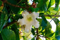 Zamyka up, biały kwiat Zdjęcie Stock