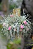 Zamyka up Bromeliad kwiat Fotografia Royalty Free