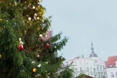 Zamyka up choinka przy starym miasteczkiem w Tallinn Obrazy Stock