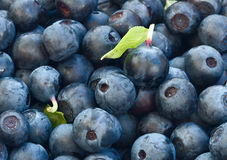 Zamyka up czarnej jagody żywność organiczna dla zdrowego łasowania i nutr Obraz Royalty Free