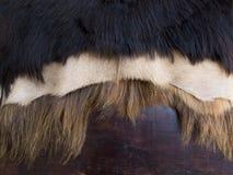 Zamyka up czarny, biel i brąz skinned koźli futerko na drewnianym b, Obrazy Stock