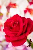 Zamyka up czerwoni sztuczni kwiaty Fotografia Royalty Free