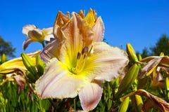 Zamyka up czerwony kwiatu tło Obraz Stock