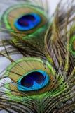 Pawi piórka Obrazy Stock