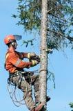 Zamyka up Fachowego lumberjack tnący drzewo na wierzchołku Fotografia Royalty Free