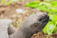 Zamyka up gigantyczny tortoise outdoors Obrazy Stock