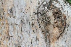 Zamyka up gnarl drzewo Zdjęcia Royalty Free
