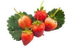 Zamyka up grupowa Czerwona truskawka na liściu Fotografia Stock