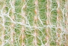 Zamyka up kaktusowa tekstura Obraz Stock