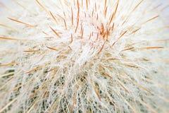Zamyka up kaktusowa tekstura Zdjęcia Stock