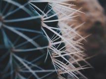 Zamyka up kaktusowi ciernie obrazy stock