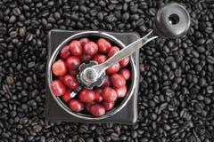 Zamyka up kawowe fasole dojrzewa w kawowym ostrzarzu Obrazy Royalty Free