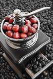Zamyka up kawowe fasole dojrzewa w kawowym ostrzarzu Obrazy Stock