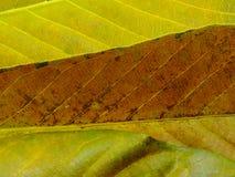 Zamyka up kolorowi tekstura liścia kolory fotografia royalty free