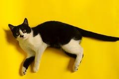 Zamyka up kot, cropped strzał zwierząt postać z kreskówki śmieszny odosobniony portret kot Fotografia Stock