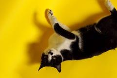 Zamyka up kot, cropped strzał zwierząt postać z kreskówki śmieszny odosobniony portret kot Obraz Stock