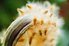 Zamyka up kwiat Zdjęcia Royalty Free