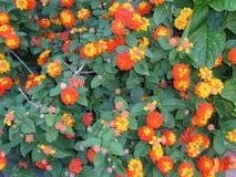 Zamyka up, kwiaty w ogródzie Obrazy Royalty Free