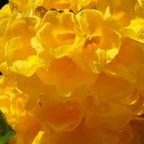 Zamyka up kwitnący pomarańczowi jaskrawi kwiaty zdjęcia stock