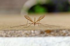 Zamyka up lota insekt zdjęcie royalty free