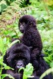 Zamyka up macierzysty halny goryl z jej dzieckiem obraz stock