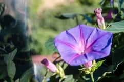 Zamyka up magenta kwiat fotografia royalty free