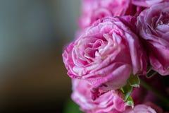 Zamyka up menchii róża w bukiecie menchii róża z blurre Obrazy Stock