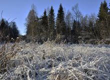 Zamyka up mroźna trawa w słońcu z lasem i niebieskim niebie w plecy Zdjęcia Royalty Free