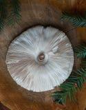 Zamyka up na parasol pieczarce (Macrolepiota procera lub Lepiota procera) Zdjęcie Royalty Free