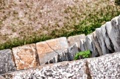Zamyka up na starych kamieniach z świrzepy dorośnięciem od go Fotografia Royalty Free