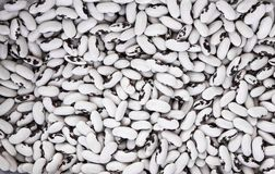 Zamyka up na surowe organicznie białe czarne fasole Makro- Zdrowy żywienioniowego jedzenia bogactwo w mikroelementach błonnik i w zdjęcie royalty free