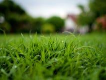 Zamyka up na trawie zdjęcie royalty free