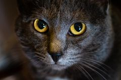 Zamyka up oczy kot fotografia royalty free