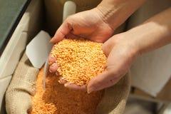 Zamyka up organicznie czerwone soczewicy Zdrowy karmowy składnik Zdjęcia Stock