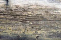 Zamyka up osłupiała drzewo powierzchnia Obraz Royalty Free