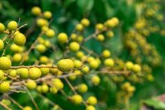 Zamyka up owoc na drzewie zdjęcia royalty free