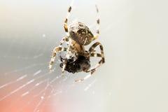 Zamyka Up pająk w sieci Zdjęcie Royalty Free