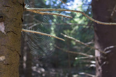 Zamyka up pajęczyna Zdjęcie Royalty Free