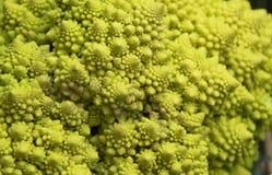 Zamyka up piękni typowi Romańscy brokuły Fotografia Royalty Free