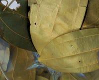 Zamyka up podpalanego liścia pikantność w szklanym pucharze obrazy royalty free
