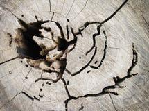 Zamyka up powierzchnia stary cięcie drzewo obrazy royalty free